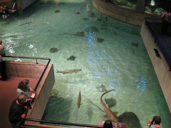 Two Tickets To The National Aquarium In Baltimore Giveaway
